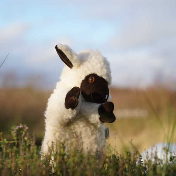 brown sheep handpuppet